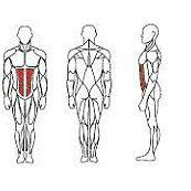 abdominal-it9514-2