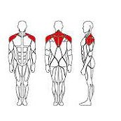 lateral-raise-it9524-2