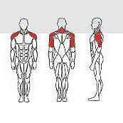 shoulder-press-IT9512-2